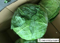 No Pesticide Fresh Flat Head Cabbage , Nutrition Mini Drumhead Cabbage